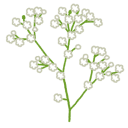 :flower_kasumisou: