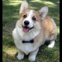 doggo1 emoji