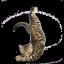 stretch cat slack emoji